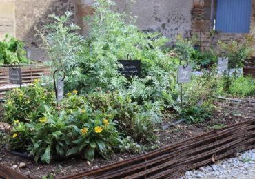 Naissance d'un jardin